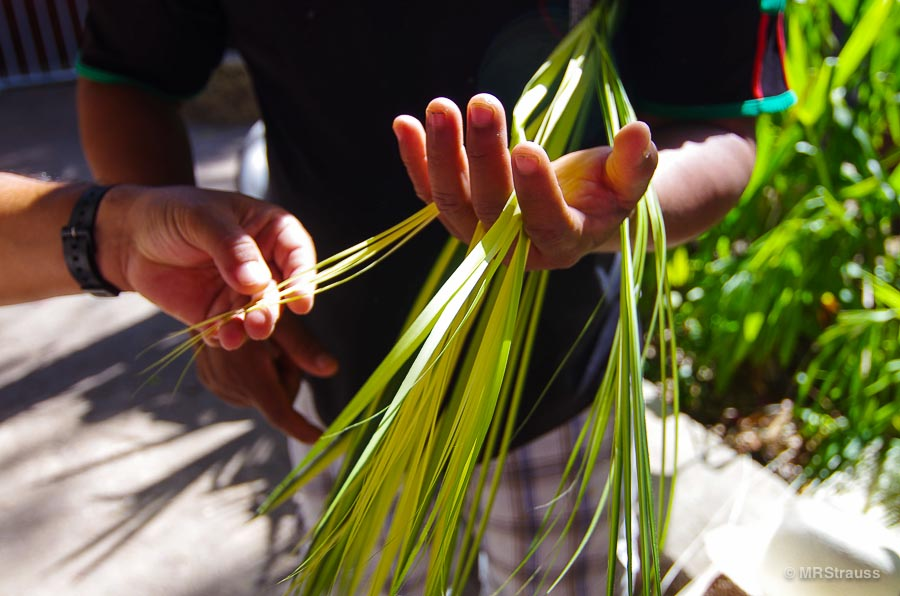 Cutting reeds for Jippi-Jappa hats