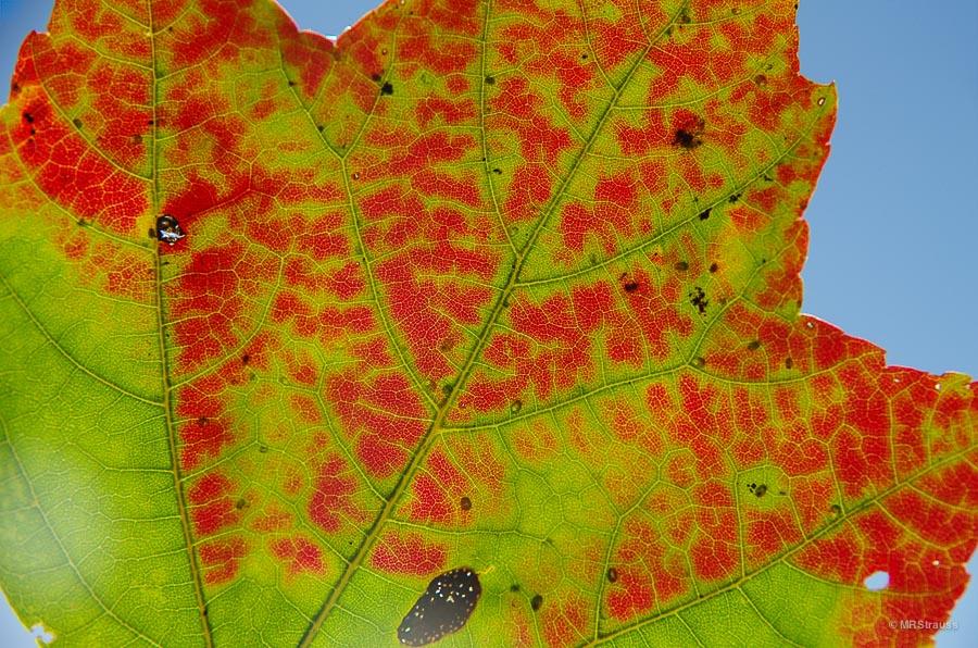 Leaf-Watermark