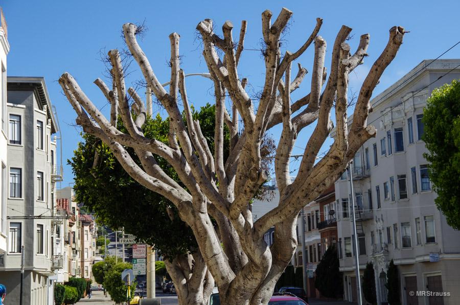 Pruning (1 of 1)